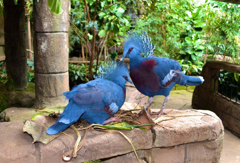 Bird Kingdom Niagara Falls Canada The World S Largest
