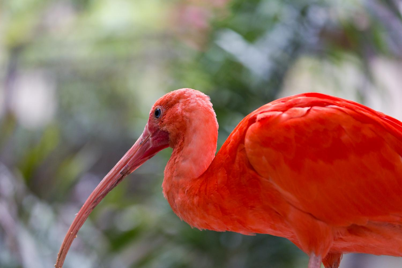 bird kingdom niagara falls canada the world u0027s largest free